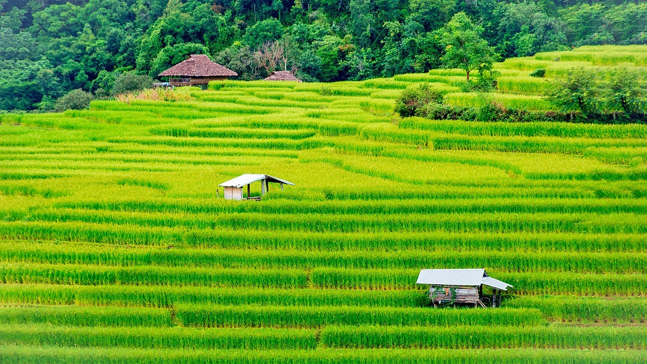 British expats in Thailand